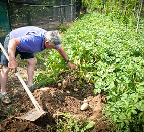 The vegetable garden Da Gelsomina